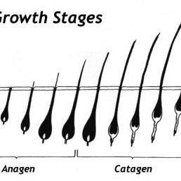 growth cycle of hair