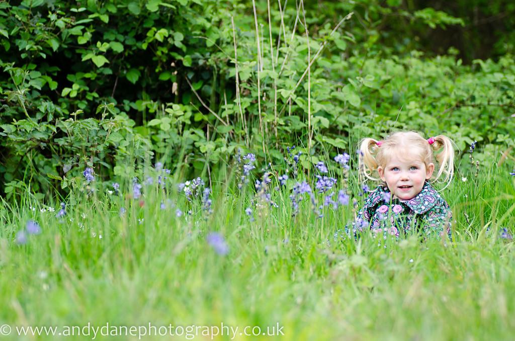 bluebells field
