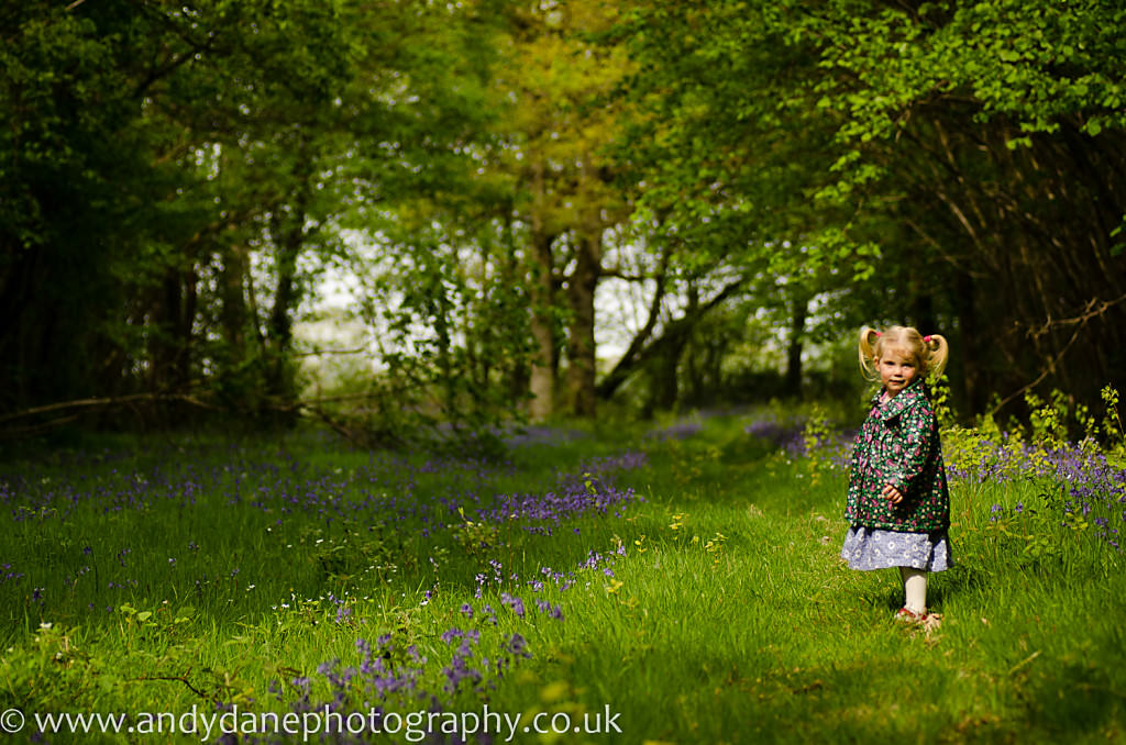 wood walk in Norfolk