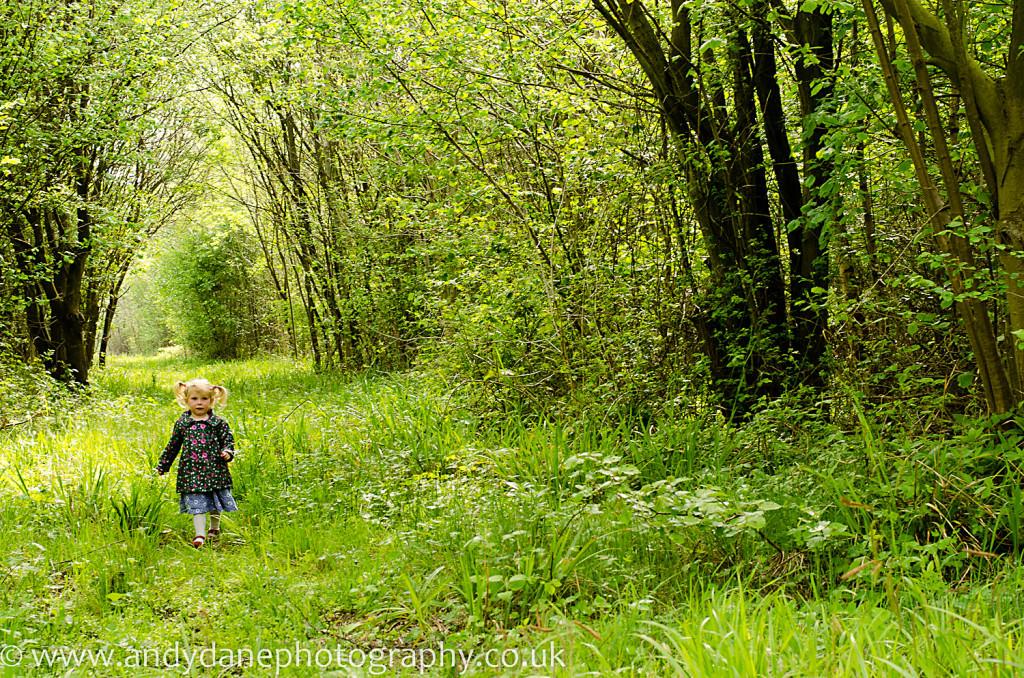 Foxley woods near Norwich