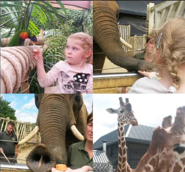 Colchester Zoo feeding the animals